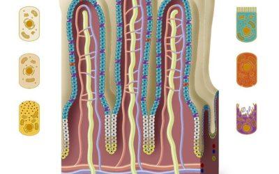 Celiakia – część 1. Objawy choroby.